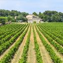 Vignoble du Languedoc à Montpellier